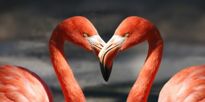 Flamingo_800x400